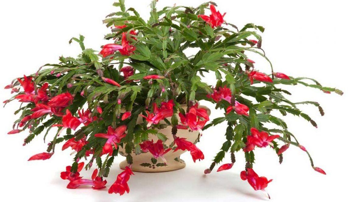 Kako održavati sobne biljke tokom zime?